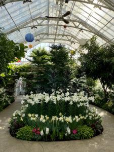 Spring Flower Show @ Wilder Park Conservatory